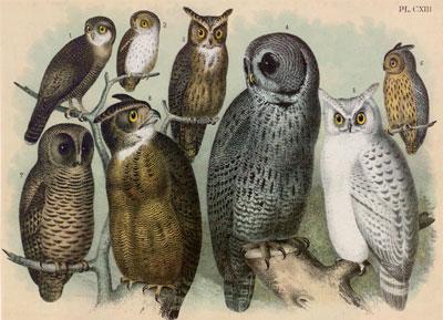 Theodore Jasper - Owls