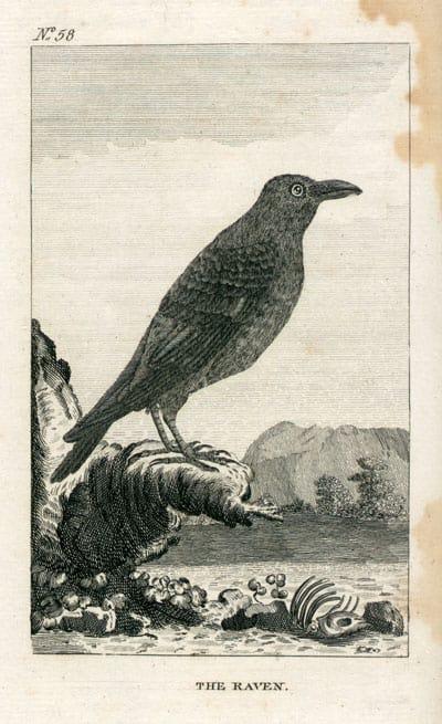 Leclerc  - Raven