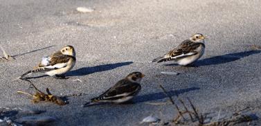 Erie Islands Audubon Christmas Bird Count 2014