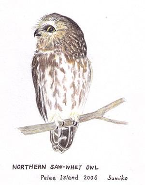 owl_web_Onishi