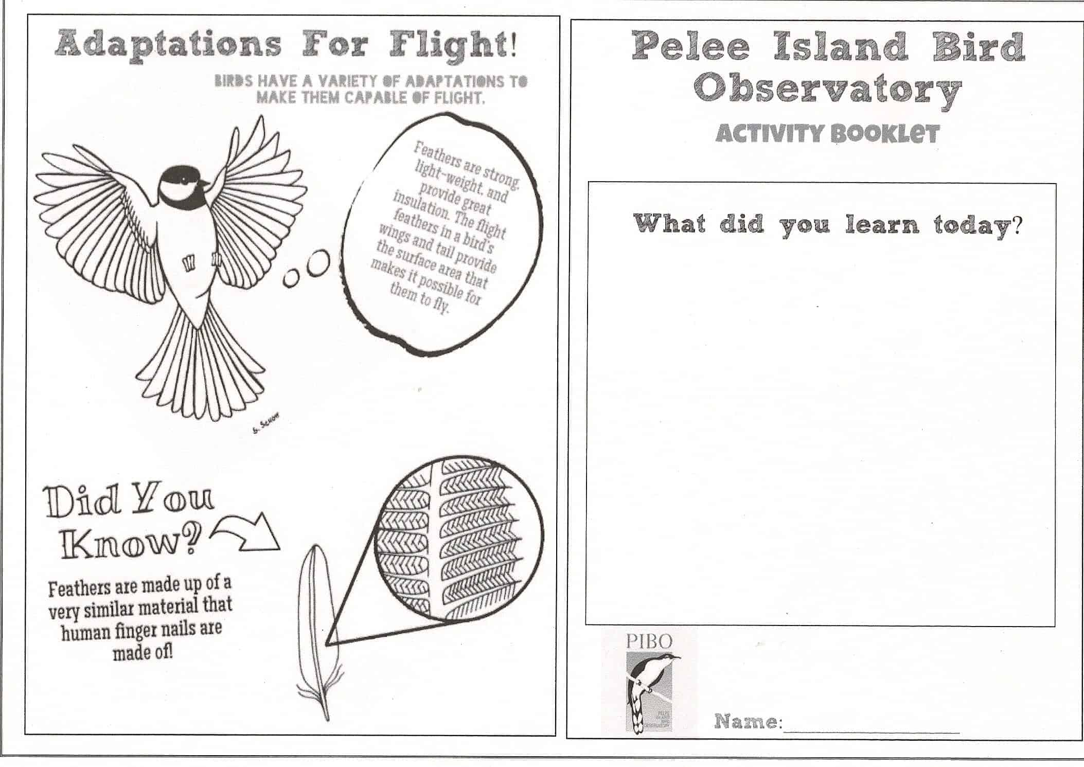 the pelee island bird observatory new pibo activity booklet for