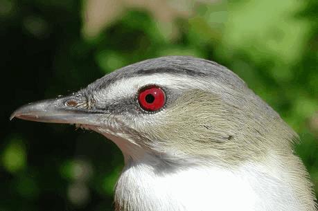 PIBO joins Great Canadian Birdathon