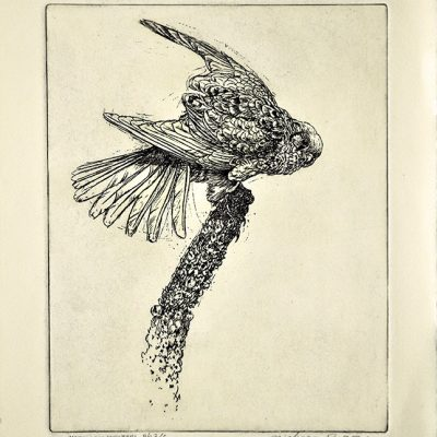 American Kestrel by Michael Dumas