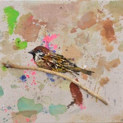Sparrow 1 by Daniel St. Amant
