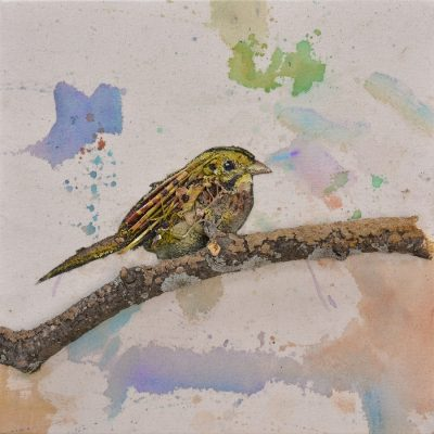 Sparrow 2 by Daniel St. Amant