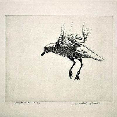 Herring Gull by Michael Dumas