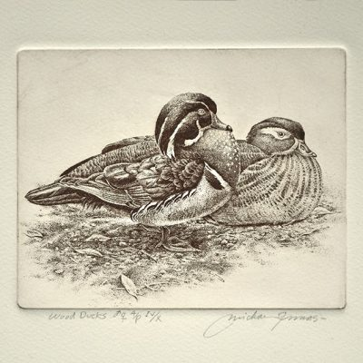 Wood Ducks by Michael Dumas