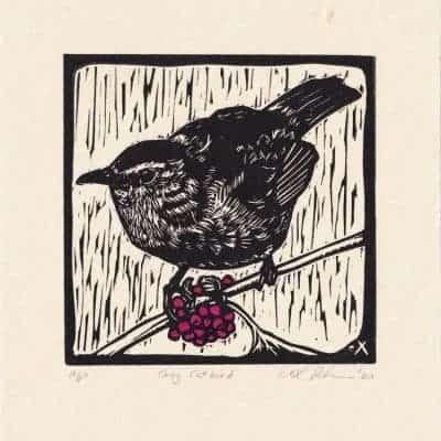 Gray Catbird by eXavier Peterson