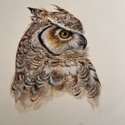 Great Horned Owl by Wallace Edwards