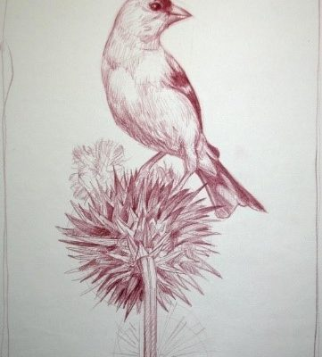 Goldfinch by Ric Sluiter