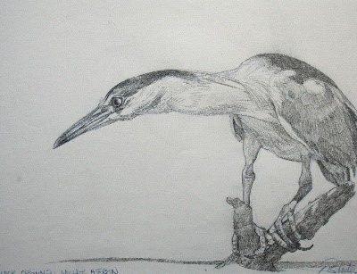 Night Heron by Ric Sluiter