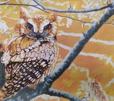 Screech Owl by John Maurer