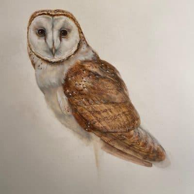 Barn Owl by Wallace Edwards