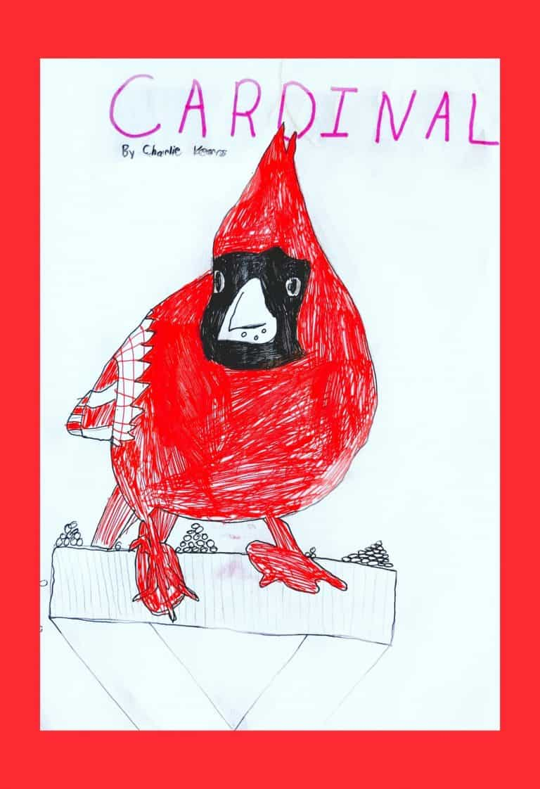 Charlie - Cardinal
