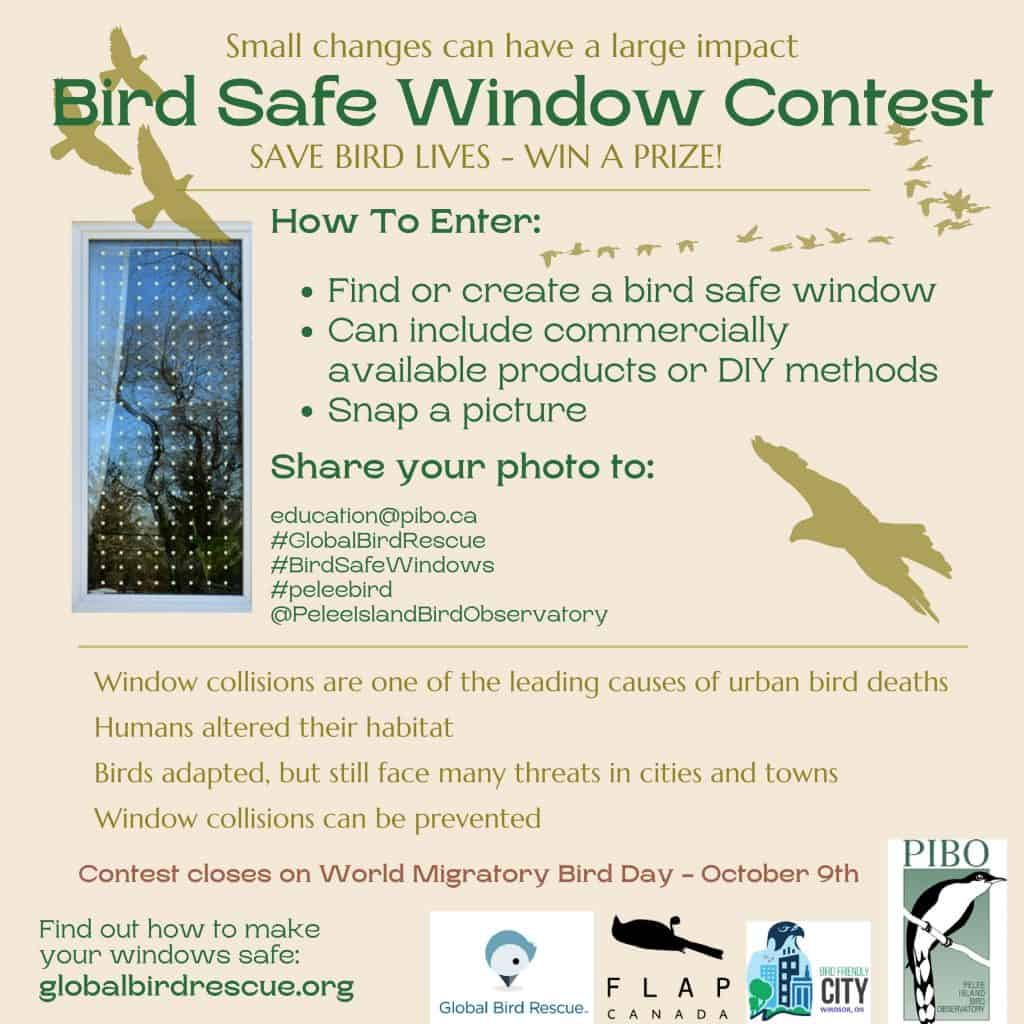 Bird Safe Windows contest September 2021-jpg