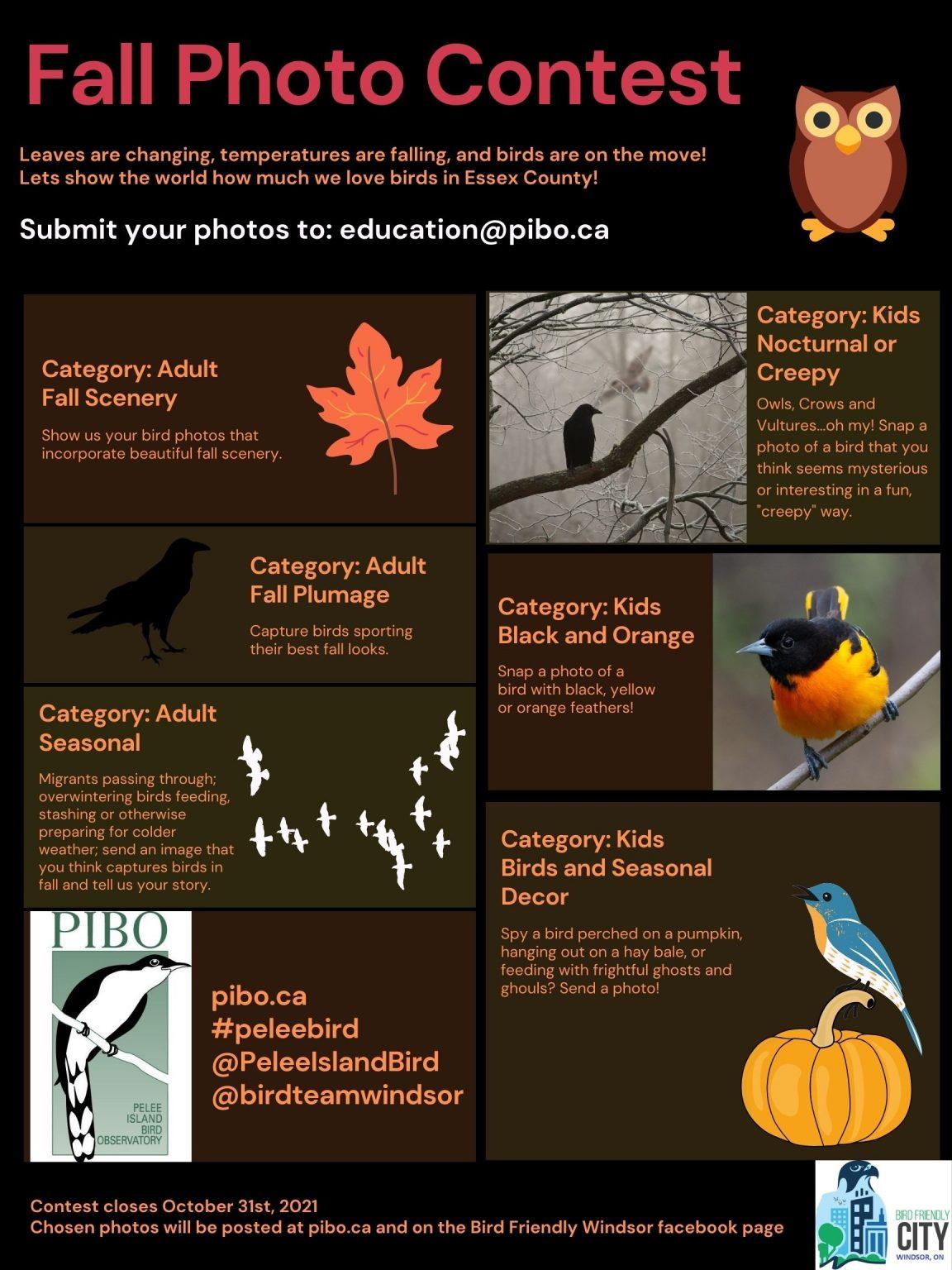 Fall Photo Contest final